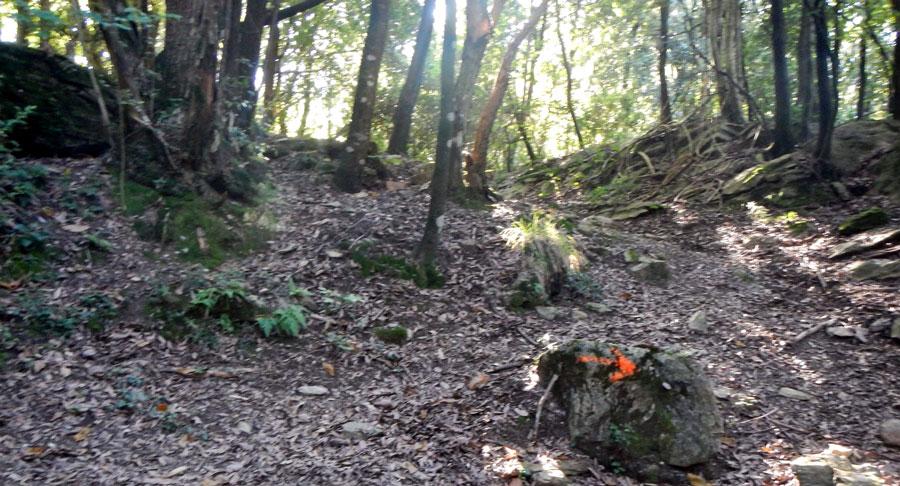 Quando è il guru a tracciare il sentiero anche le frecce indicano la direzione opposta
